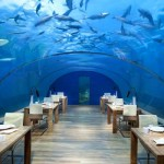 Beyond SeaWorld – Underwater Vacations