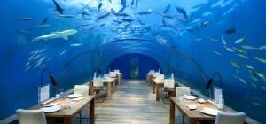 Beyond SeaWorld – Underwater Vacations